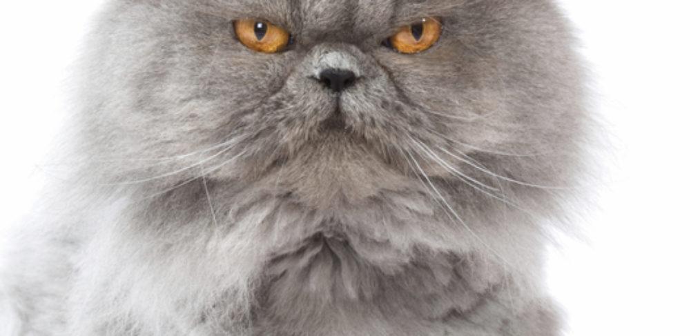 verlieren katzen milchzähne