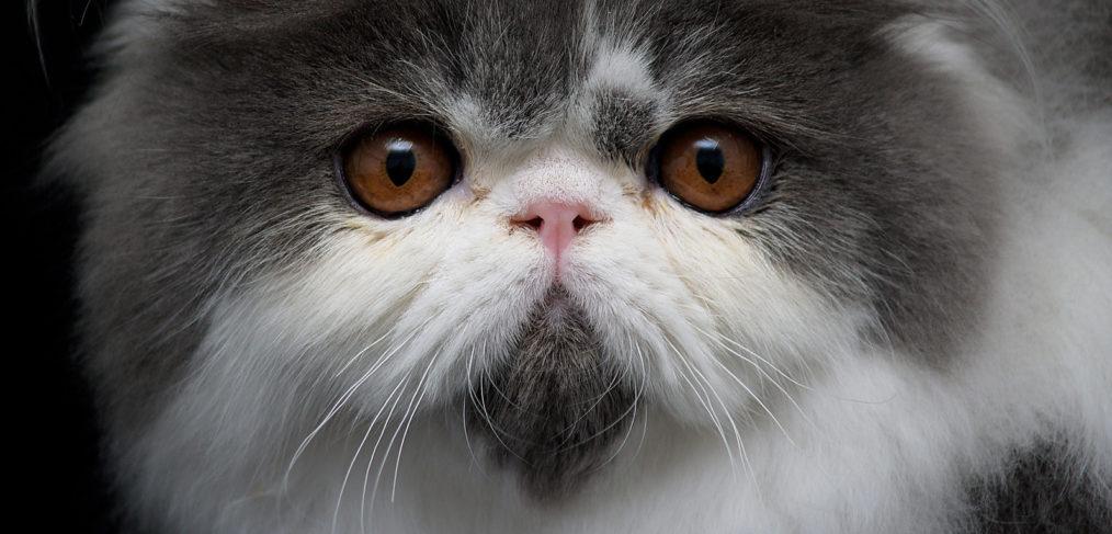 katzen weibchen oder männchen was ist besser