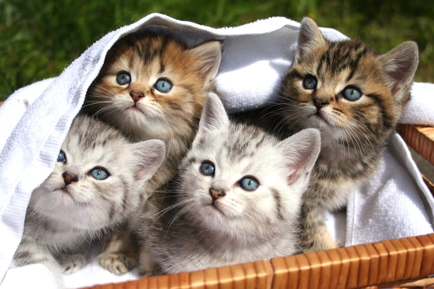 Junge Katzen Kaufen