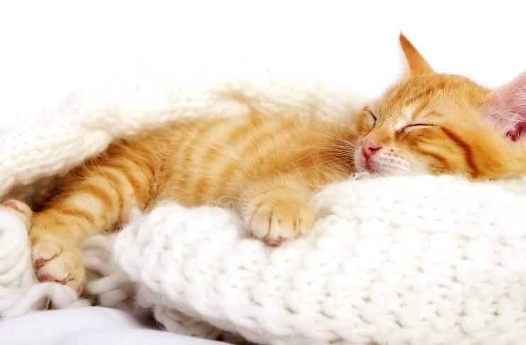 katzenliebhaber katzen katzenbabys zu verschenken verkaufen inserate und informationen. Black Bedroom Furniture Sets. Home Design Ideas