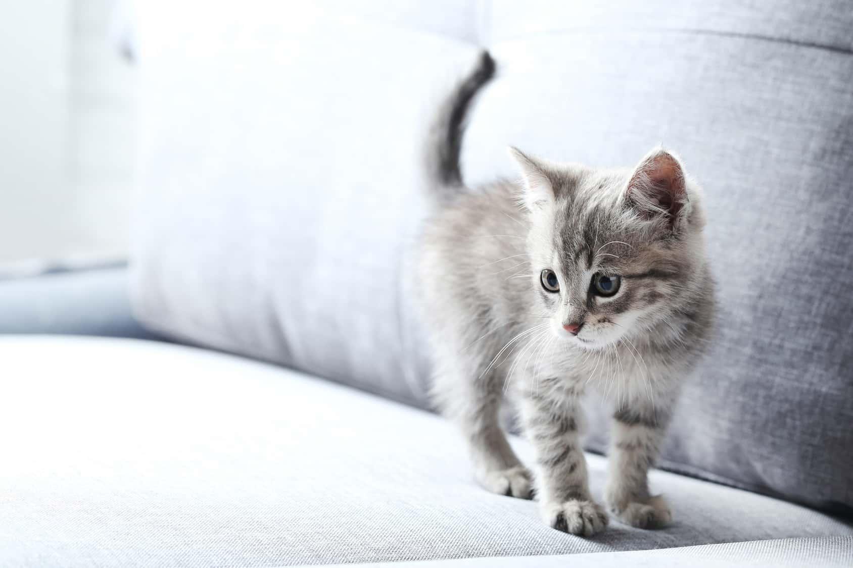 gefahren f r katzen im haushalt katzenliebhaber. Black Bedroom Furniture Sets. Home Design Ideas