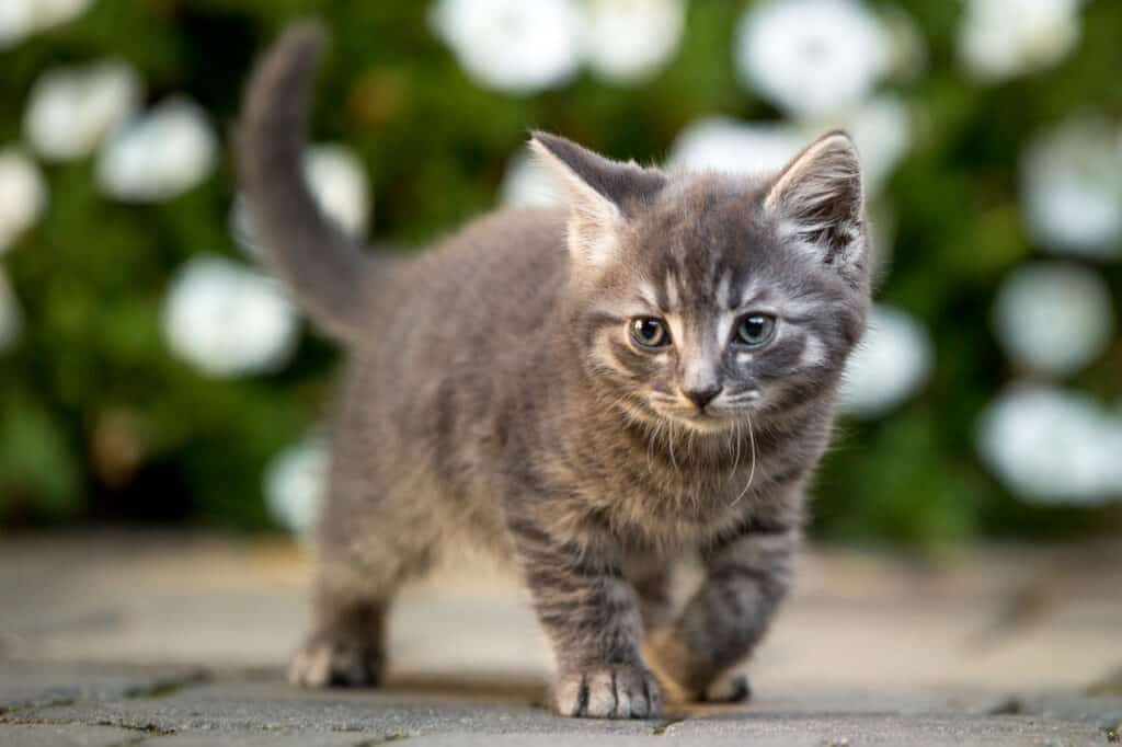 Babykatze auf Entdeckungsreise