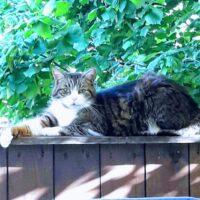 Katzendame Sally sucht liebevolles Zuhause